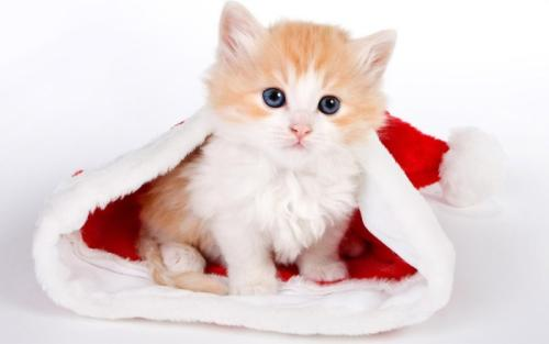 猫咪爱吃鱼它们吃鱼会不会被鱼刺卡到吗_猫咪吃鱼时也可能被鱼刺卡到吗