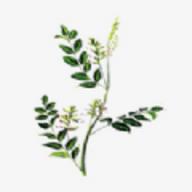 中药植物百科app下载_中药植物百科app安卓版下载
